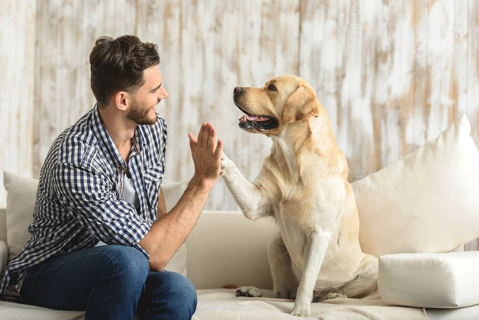 does brain training for dogs work